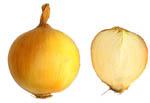 Allium_cepa_cultivar_OH_1