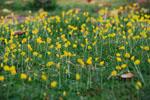 Arachis_duranensis_cultivar_KSSc_38901__PI_497483_