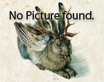 Rhinocladiella_mackenziei_CBS_650_93